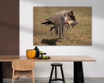 Witruggier Gyps africanus)