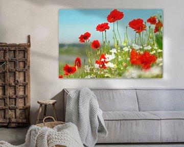 Mohnblumen mit Kamille von Corinne Welp