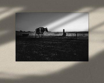 Vache dans la prairie sur Nathan Okkerse