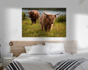 Schotse Hooglanders van Samantha Rorijs
