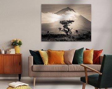 L'arbre et sa montagne sur Alexander Dorn