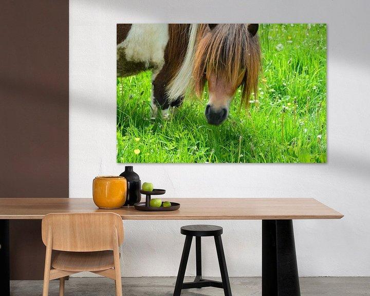 Beispiel: Pony auf der Weide von Susanne Seidel
