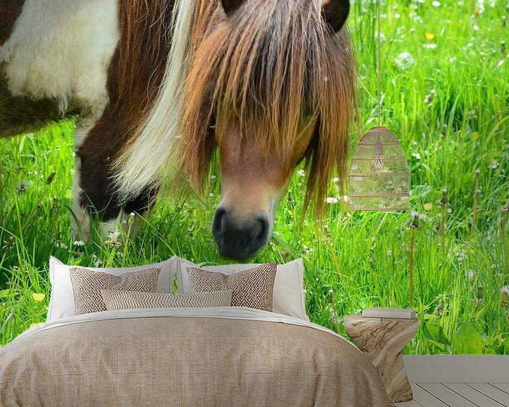 Beispiel fototapete: Pony auf der Weide von Susanne Seidel