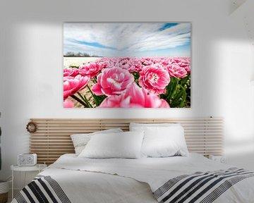 Gros plan d'un champ de tulipes roses près de Swifterbant. sur Nederlandschap