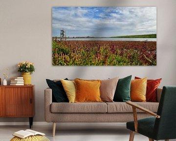 Zeekraal in Zeeland van Zeeland op Foto