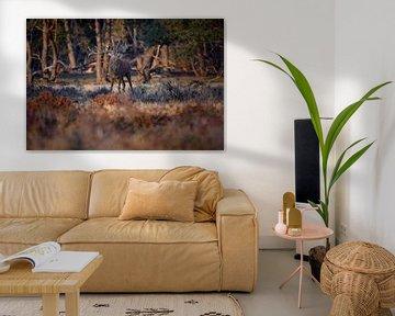 Rotwild Brunft von Andy van der Steen - Fotografie