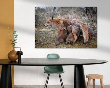Mutterfuchs mit Jungen von Andy van der Steen - Fotografie