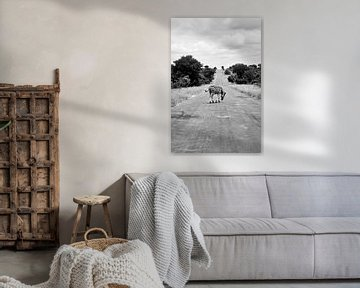 Zebrastreifen in Timbavati Südafrika von Nathalie Wilmsen