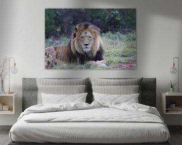 Löwen in Südafrika von Dirk Rüter