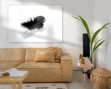 Schwarze Feder auf weißem Hintergrund von shoott photography