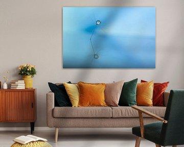 Paardenbloem pluis met waterdruppel van shoott photography
