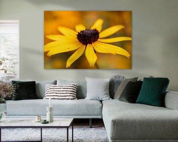 Gelbe Sonnenhut-Blume von KB Design & Photography (Karen Brouwer)