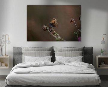 Schmetterling auf der Heide nach der Blütezeit von KB Design & Photography (Karen Brouwer)
