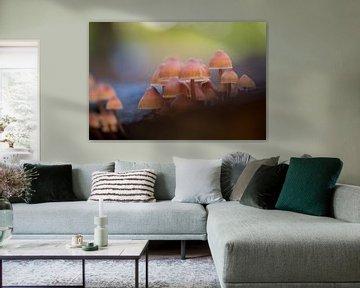 Pilze Herbstwald von shoott photography