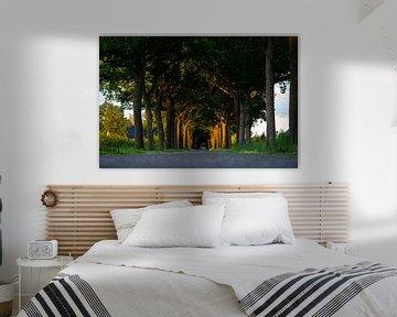 Laatste zonlicht kleurt de bomen van Robbie Veldwijk