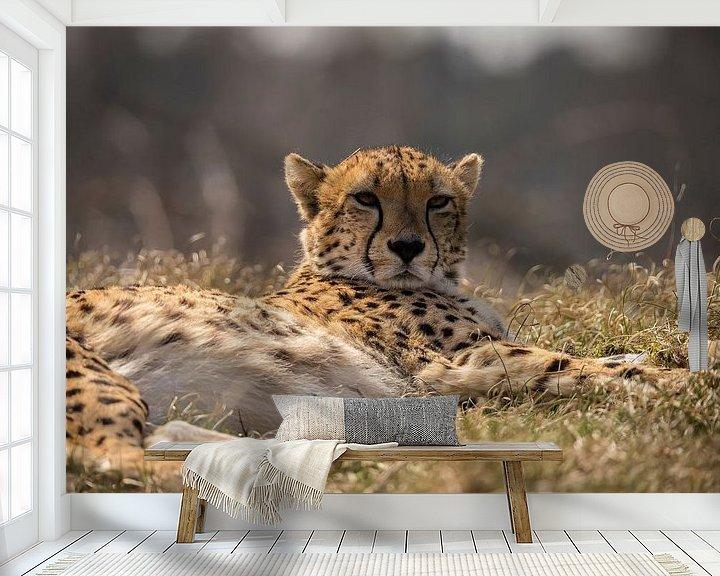 Beispiel fototapete: Cheetah, Cheeta. Acinonyx jubatus von Gert Hilbink