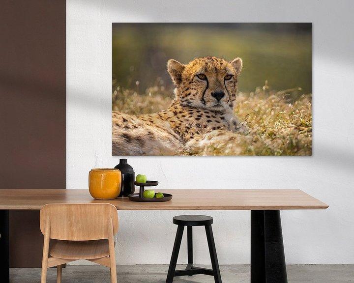 Beispiel: Cheetah, Cheeta. Acinonyx jubatus von Gert Hilbink