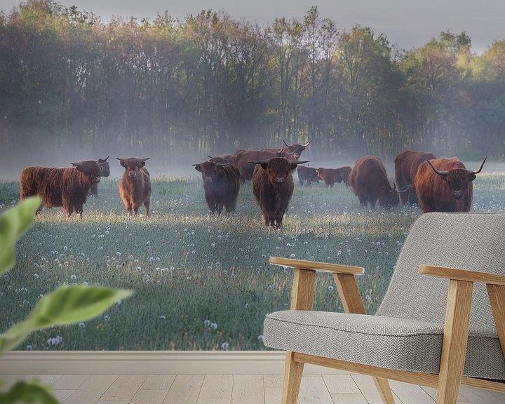 Sfeerimpressie behang: Schotse hooglander van Jeannette Braamskamp