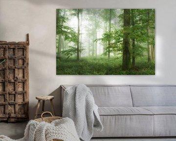 Une forêt verte dans la brume