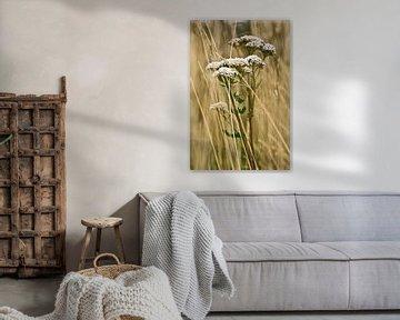 Bloem in gras von Brenda Gonzalez