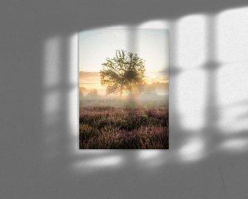 Welcome sunlight van Lex Schulte
