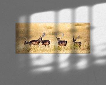 Herten op de Hoge Veluwe, panoramafoto van Gert Hilbink