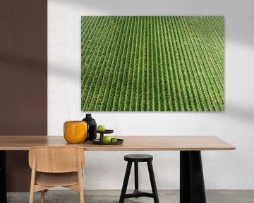 Peren, peren en nog eens peren... van Paul van Baardwijk