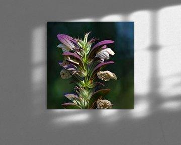 """Acanthus bloem van Janny Schilderink......Atelier """"de Tuute """""""