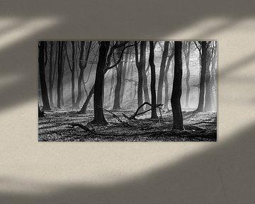 Zonneharpen in een mistig bos van Martin Winterman