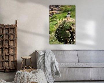 Vanaf een hoog punt overziet een papegaaiduiker het Schotse eiland Staffa van Rob van Hilten