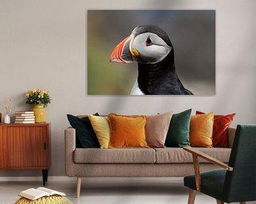 Portret van een papegaaiduiker van Rob van Hilten