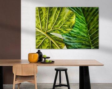 Twee tropische bladeren van Wim Schuurmans