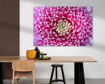Close up roze bloem van Noud de Greef