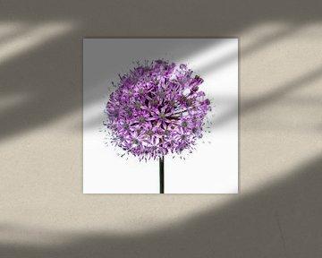 Paarse bloem - bol van Noud de Greef
