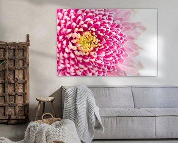 Licht roze bloem met geel hart van Noud de Greef