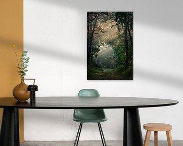Zonneharpen in het bos van Marjolein van Roosmalen