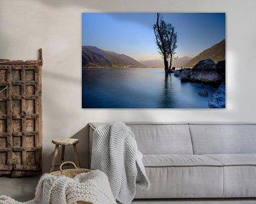 Lago Maggiore, meer, landschap, bergen, boom van Lidewij Olive