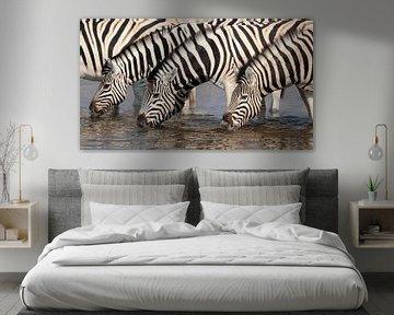 Zebras am Wasserloch von Angelika Stern