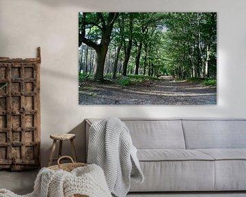 Path through the forest van Marco de Groot