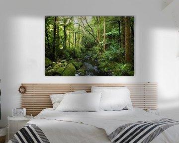 Dschungel in Neuseeland