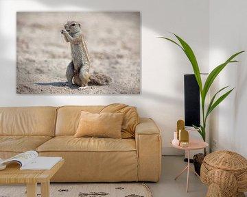 Gophers in Namibië van Angelika Stern
