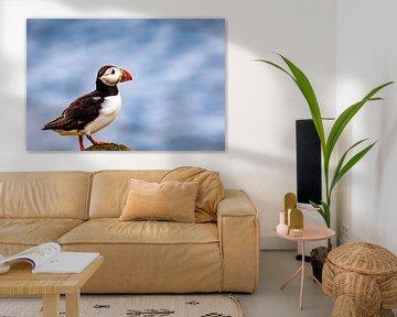 Papegaaiduiker van Antwan Janssen
