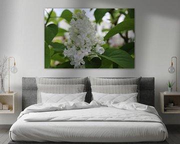 Flieder in Blüte - Fliederbaum von Geert Visser