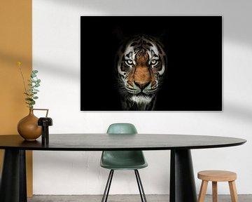 Tiger taucht aus der Dunkelheit auf von Marcel Kieffer
