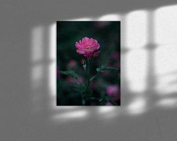 Blume von Rianne Jacobs
