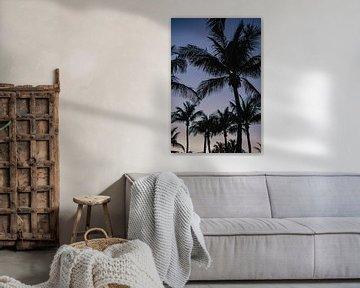 Palmbomen Key West Florida