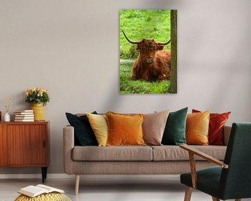Portret van een bruine schotse hooglander in het gras van Trinet Uzun
