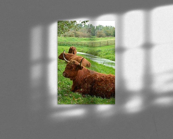 Beispiel: Porträt eines braunen schottischen Hochlandbewohners im Gras von Trinet Uzun
