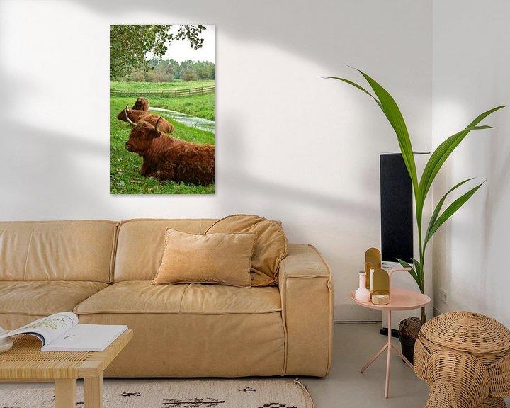 Sfeerimpressie: Portret van een bruine schotse hooglander in het gras van Trinet Uzun