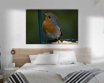 Robin von Js photography